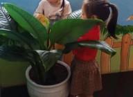 Hoạt động ngày trực nhật của các bé lớp chồi 2 và  mầm 4