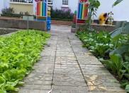 """'Vườn rau của bé"""" – trường mầm non THSP Kon Tum"""